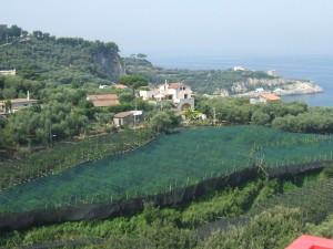 View from the Hotel Dania Capo di Sorrento